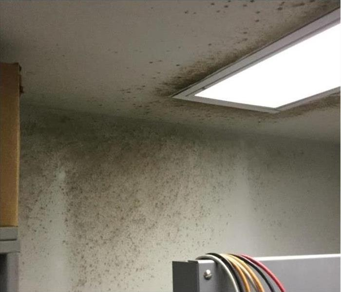 Mold in Computer Lab